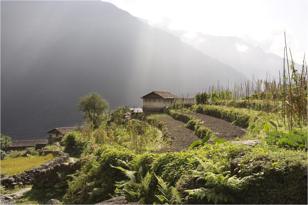 Nepal@zerbin_10