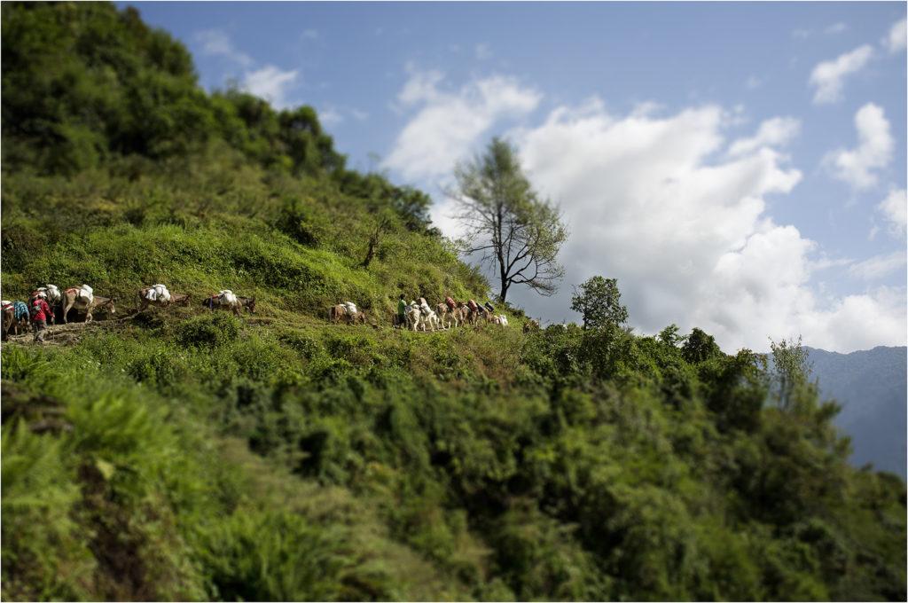 Nepal@zerbin_11