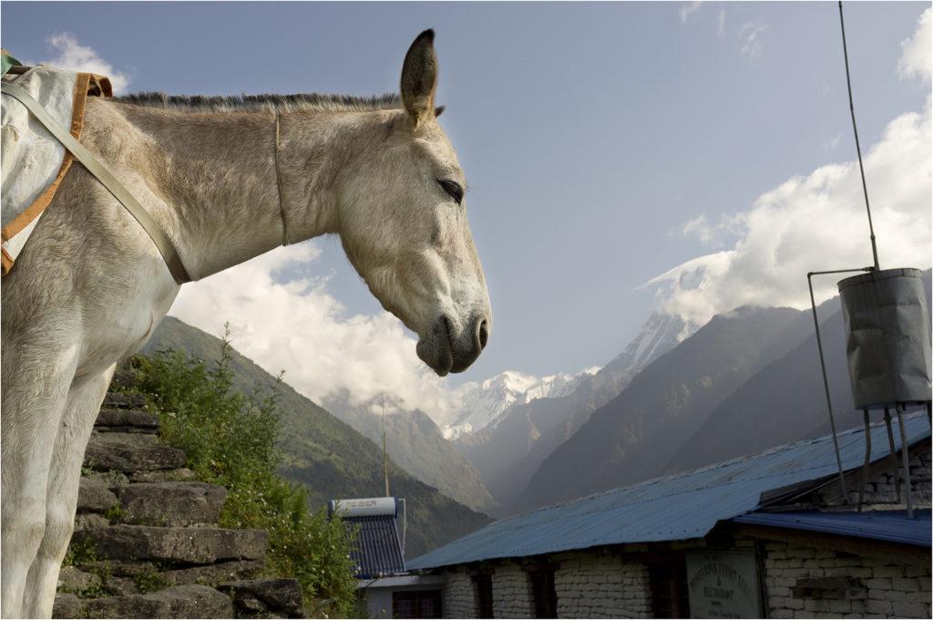 Nepal@zerbin_12