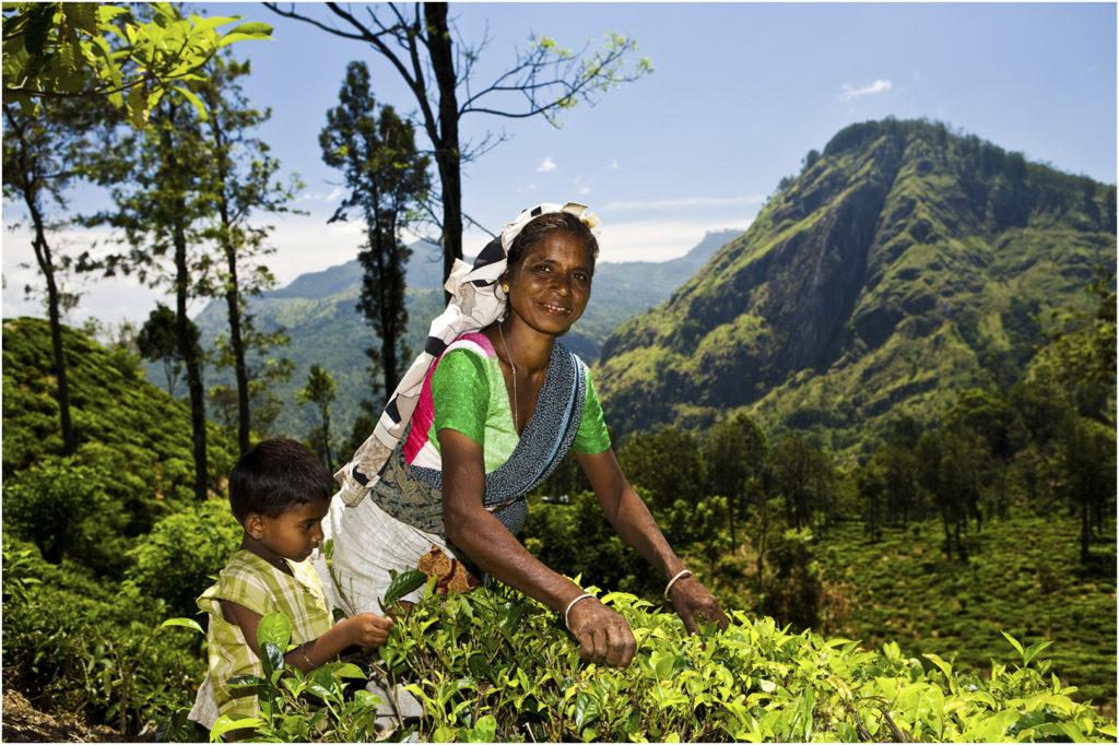SriLanka@zerbin_14