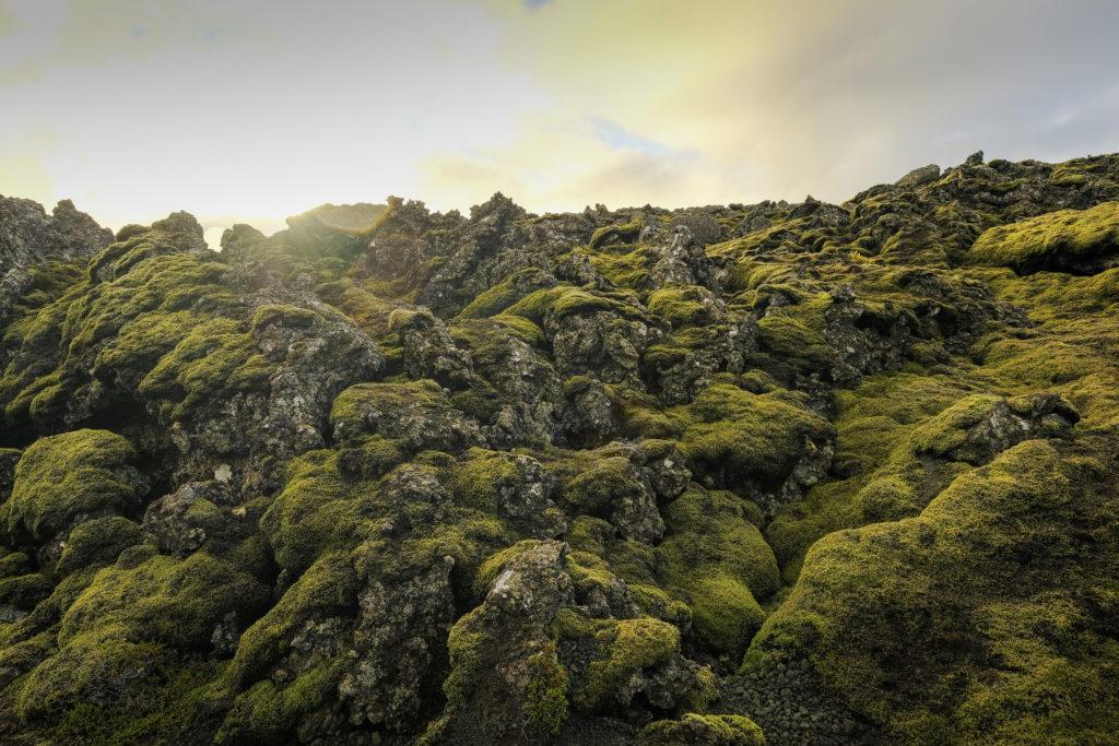 Iceland2@zerbin_005