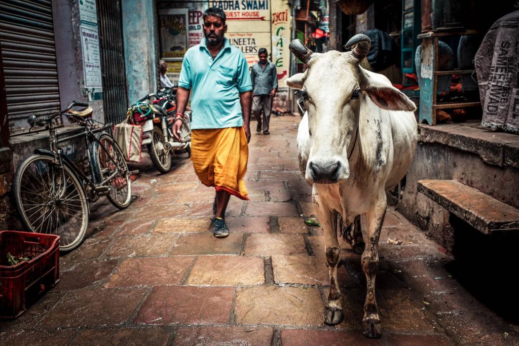 Indien2©zerbin_22